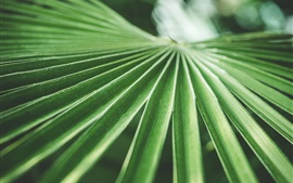 Preview wallpaper Palm green leaves