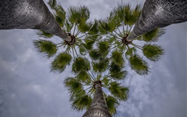Palm trees, sky, from bottom view