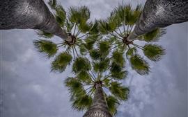 Пальмы, небо, снизу