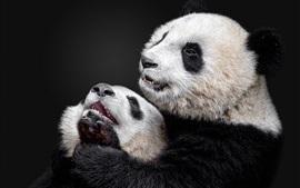 Aperçu fond d'écran Panda et petit panda, fond noir