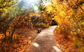 Park, trees, path, bench, autumn