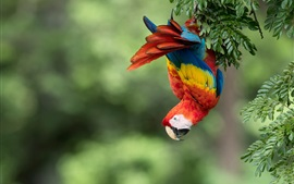 Preview wallpaper Parrot, macaw, colorful feathers, tree