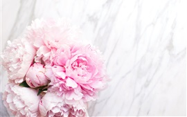 Preview wallpaper Pink peonies, tender