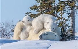 Семья медведей, снег, деревья