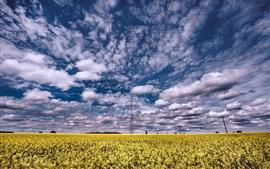 Campo de flores de colza, líneas eléctricas, nubes, verano