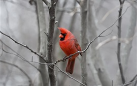 Red feather bird, tree, twigs