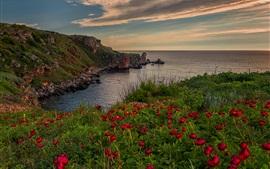Flores rojas, mar, nubes