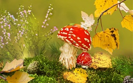 Preview wallpaper Red mushrooms, amanita, yellow leaves, autumn