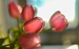 Preview wallpaper Red tulips, backlight