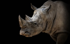 Preview wallpaper Rhino, black background