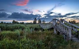 Rio, arbustos, ponte de madeira, crepúsculo