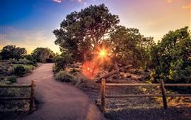 Дорога, деревья, забор, солнечный свет