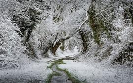 Nieve, hierba, árboles, corriente, invierno