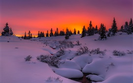 Snow, trees, sunset, sky