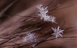 Preview wallpaper Snowflakes macro photography, grass