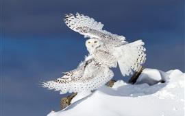 미리보기 배경 화면 눈 올빼미 비행, 날개, 눈