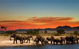 Alguns elefantes, crepúsculo, áfrica