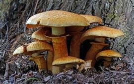 Certains champignons, la nature