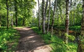Aperçu fond d'écran Printemps, forêt, arbres, route, vert
