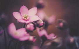 Primavera, flores rosadas fotografía macro
