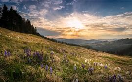 미리보기 배경 화면 봄, 사면, 꽃, 햇빛