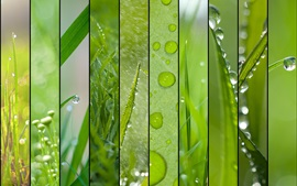 Preview wallpaper Spring theme, grass, green, water drops