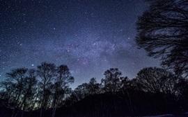 壁紙のプレビュー 星空、空、夜、木