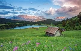 Verão, grama, flores, casas, lago
