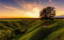 Verano, hierba, árboles, sol, mañana