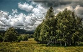 미리보기 배경 화면 하, 수, 잔디, 구름