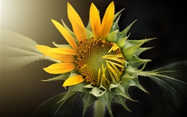 Preview wallpaper Sunflower macro photography, glare, bokeh