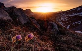 Nascer do sol, montanhas, flores, raios de sol, manhã