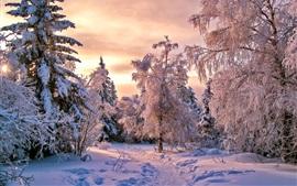 Толстый снег, деревья, зима, сумерки