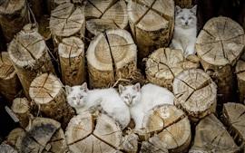 Three white cats, stump