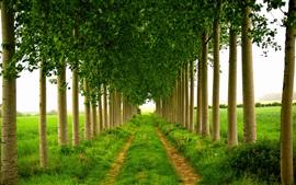 Árboles, hierba, callejón, campos