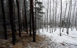 Trees, grass, snow, winter