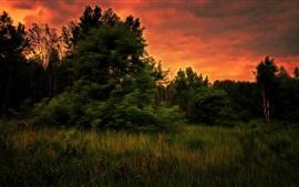 Árboles, hierba, puesta de sol, estilo de arte