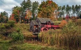 Деревья, дом, мельница, трава, осень