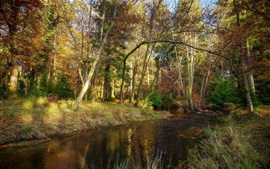 Árvores, rio, grama, outono