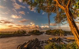 Árvores, pedras, rio, tropical