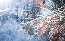 Galhos, folhas amarelas, neve, inverno