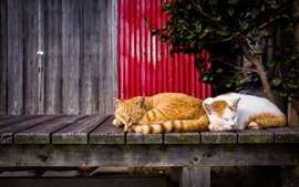 Preview wallpaper Two cats sleeping