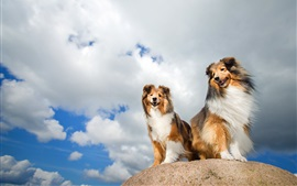 Preview wallpaper Two dogs, friends, clouds
