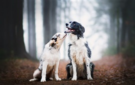 Preview wallpaper Two dogs, friends, forest