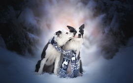 Preview wallpaper Two dogs, friends, scarf, snow