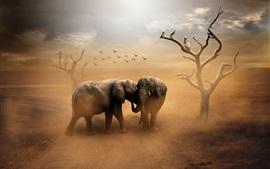 Dois elefantes, pássaros, poeira
