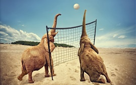 Two elephants play volleyball