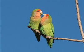 Preview wallpaper Two green parrots, blue sky