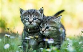 Два котята, полевые цветы, лето