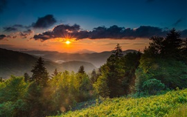Preview wallpaper USA, North Carolina, mountains, trees, sunrise, fog, morning